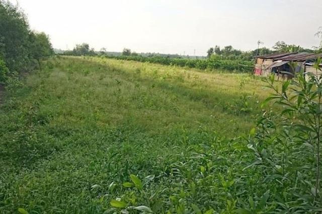 TPHCM đề nghị chuyển hơn 300ha đất nông nghiệp thành khu đô thị sinh thái - 1